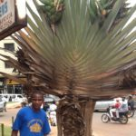 Stephen Ndamba