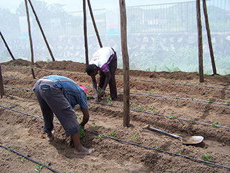 Greenhouse Projects by Missions to Africa